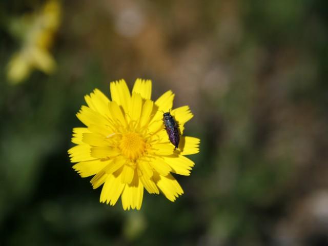 10 Dicas Para Começar A Sua Horta Com Principios De Permacultura