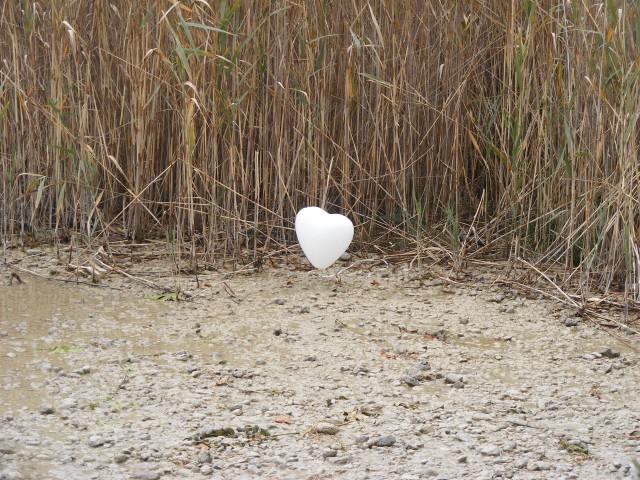 A Inteligência Do Coração